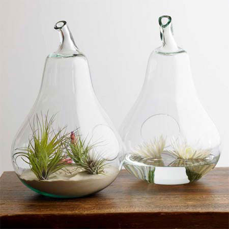 Pear vase and terrarium